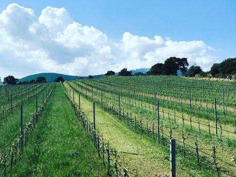 Azienda vitivinicola in vendita a Berchidda, Olbia-Tempio