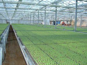 Azienda agricola con serra da 4000 mq ad alta tecnologia, Imperia
