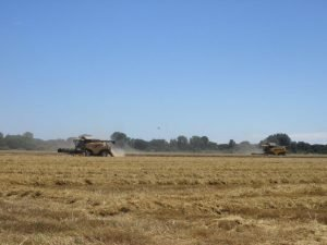 Terreno agricolo di 450000 mq, in vendita a Ravenna
