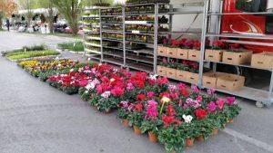 Vendita attività commerciale ambulante, piante e fiori, Brescia