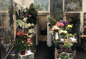 Attività piante, fiori e articoli da regalo, Castelsantangelo, Roma